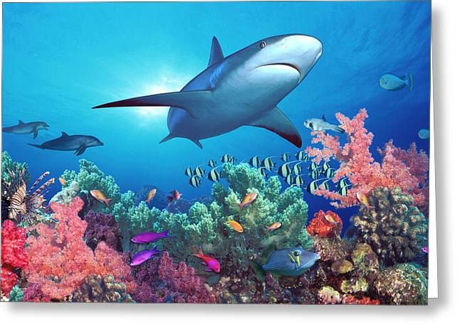 School Of Fish Greeting Cards - Low Angle View Of A Shark Swimming Greeting Card by Panoramic Images