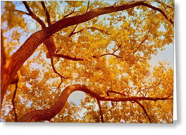 Botany Greeting Cards - Low Angle View Of A Tree In Autumn Greeting Card by Panoramic Images