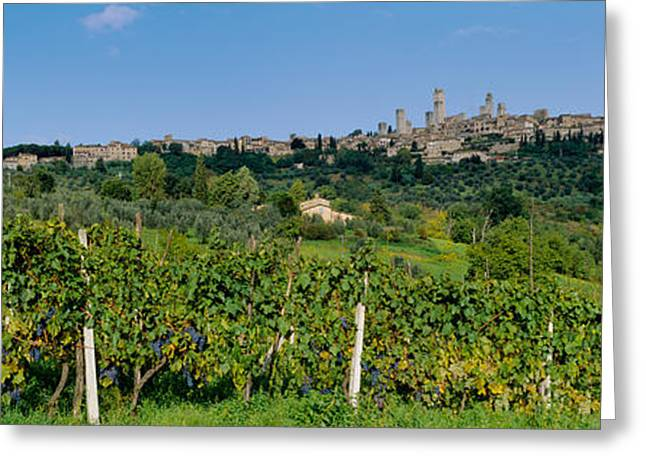 Winery Photography Greeting Cards - Low Angle View Of A Vineyard, San Greeting Card by Panoramic Images