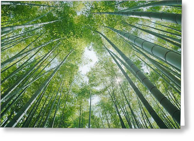 Honshu Greeting Cards - Low Angle View Of Bamboo Trees Greeting Card by Panoramic Images