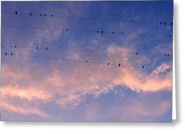 Flock Of Bird Greeting Cards - Low Angle View Of Birds Perching Greeting Card by Panoramic Images