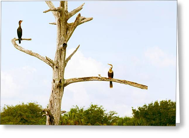 Cormorants Greeting Cards - Low Angle View Of Cormorants Greeting Card by Panoramic Images