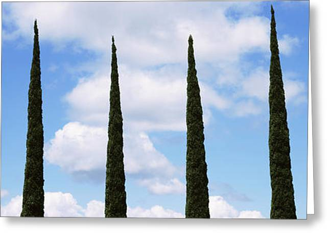 Bare Trees Greeting Cards - Low Angle View Of Leafless Palm Tree Greeting Card by Panoramic Images