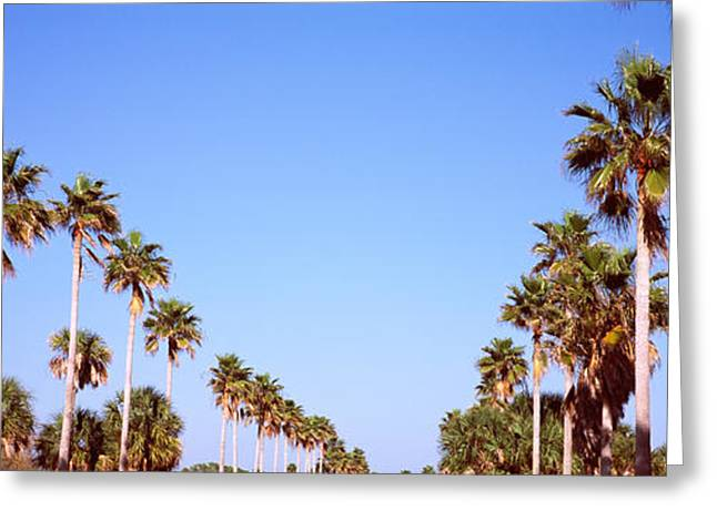 Low Angle View Of Palm Trees, Fort De Greeting Card by Panoramic Images