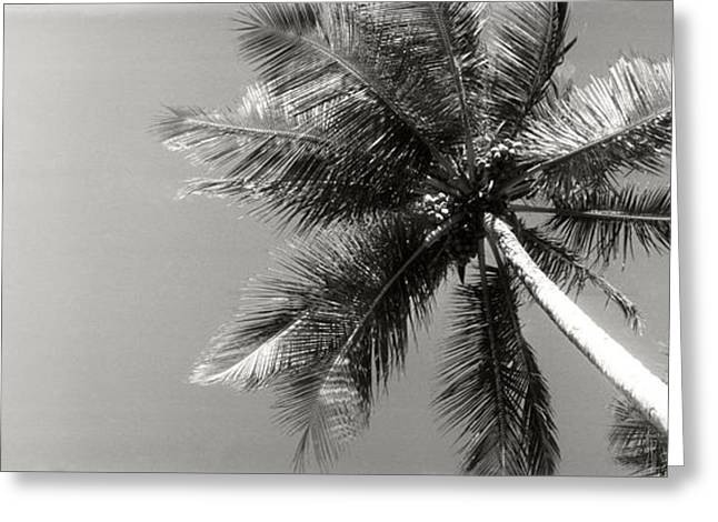 Morros Greeting Cards - Low Angle View Of Palm Trees, Morro De Greeting Card by Panoramic Images