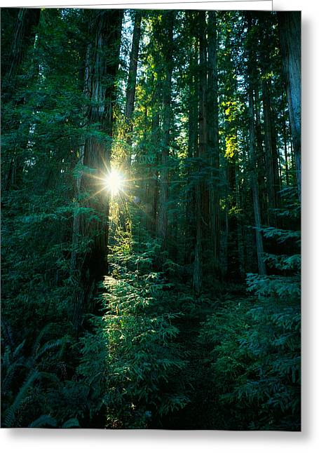 Reaching Up Greeting Cards - Low Angle View Of Sunstar Greeting Card by Panoramic Images