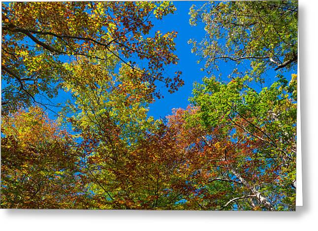 Autumn Colors Greeting Cards - Low Angle View Of Trees, Letchworth Greeting Card by Panoramic Images