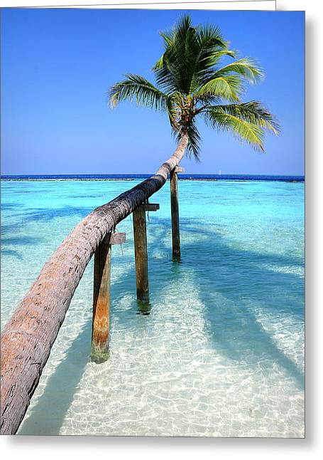 Zen Artwork Greeting Cards - Low Bow. Tropical Palm over Lagoon Greeting Card by Jenny Rainbow