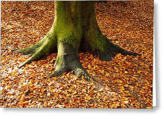 Fallen Leaf Greeting Cards - Low Section View Of A Tree Trunk Greeting Card by Panoramic Images