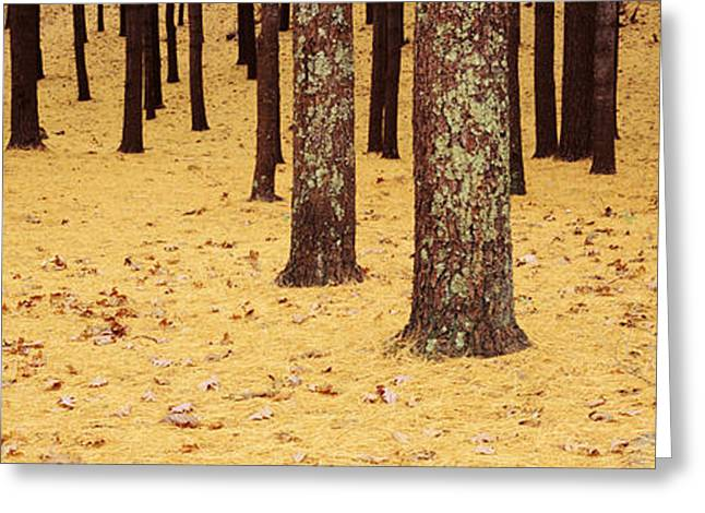 Low Section Greeting Cards - Low Section View Of Pine And Oak Trees Greeting Card by Panoramic Images