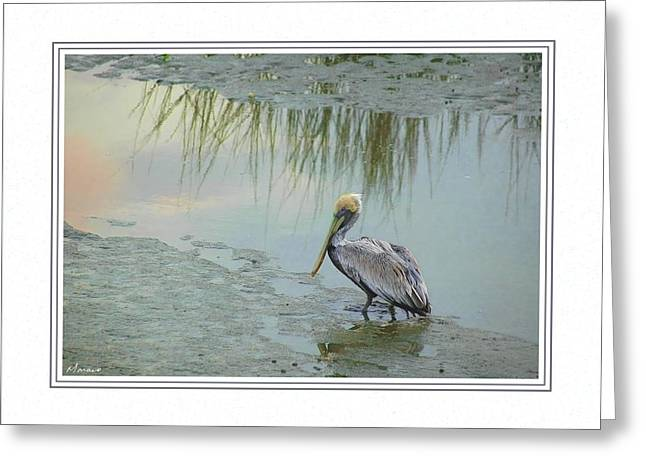 Matting Greeting Cards - Low Tide Greeting Card by Barry Monaco