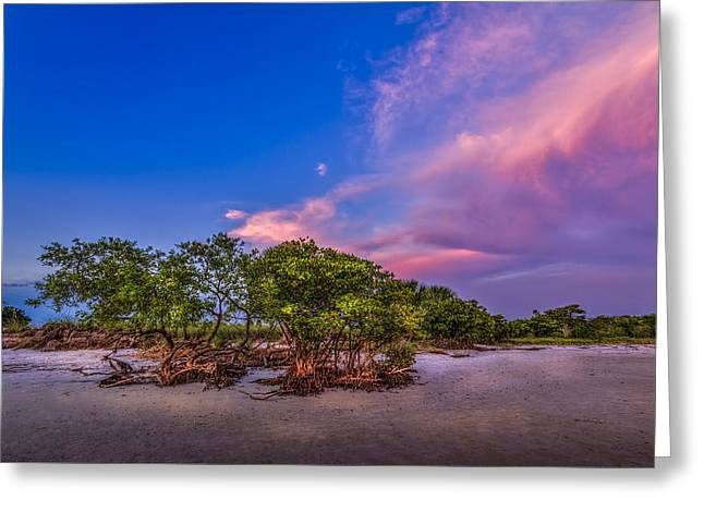 Ocean Shore Greeting Cards - Low Tide Mangrove Greeting Card by Marvin Spates
