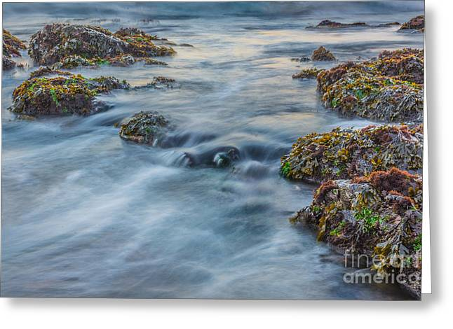 Caost Greeting Cards - Low Tide on the Oregon Coast Greeting Card by Daniel Ryan
