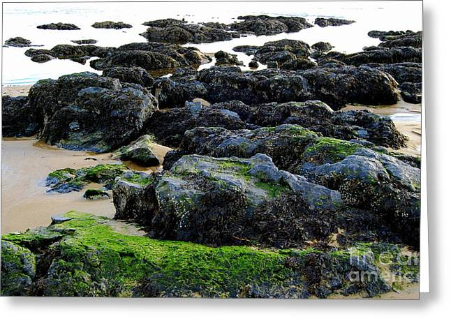 Scenes Of Pebble Beach Greeting Cards - Low Tide Treasures Greeting Card by Eunice Miller