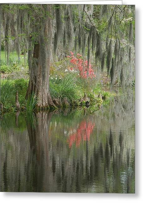 Tree Art Giclee Greeting Cards - Lowcountry Series I Greeting Card by Suzanne Gaff