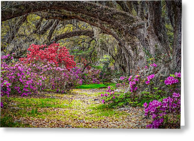 Steve Dupree Greeting Cards - Lowcountry Spring Greeting Card by Steve DuPree