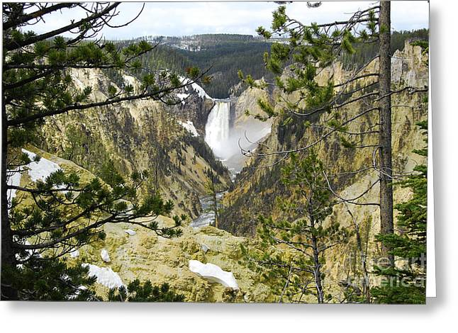 Lower Falls From Artist Point Yellowstone National Park Greeting Card by Shawn O'Brien