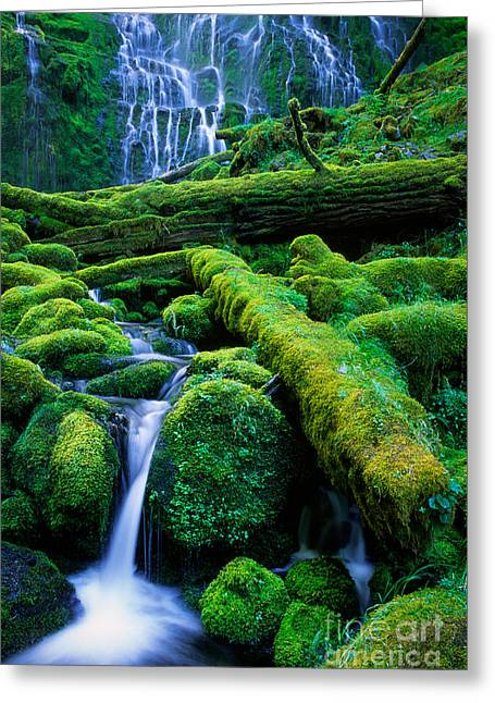 Moss Greeting Cards - Lower Proxy Falls Greeting Card by Inge Johnsson