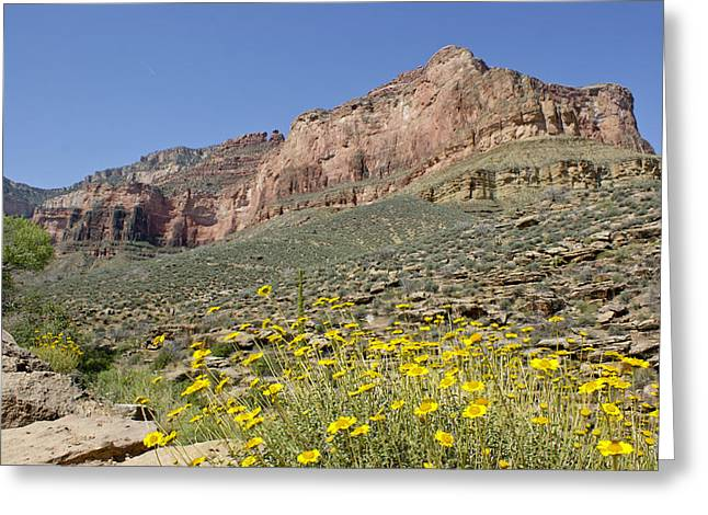 Looking At The Past Greeting Cards - Flowers and the Grand Canyon Greeting Card by Brian Kamprath