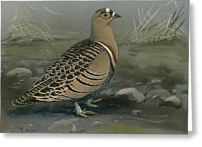 1874 Greeting Cards - Lowes Sand Grouse Greeting Card by Louis Agassiz Fuertes