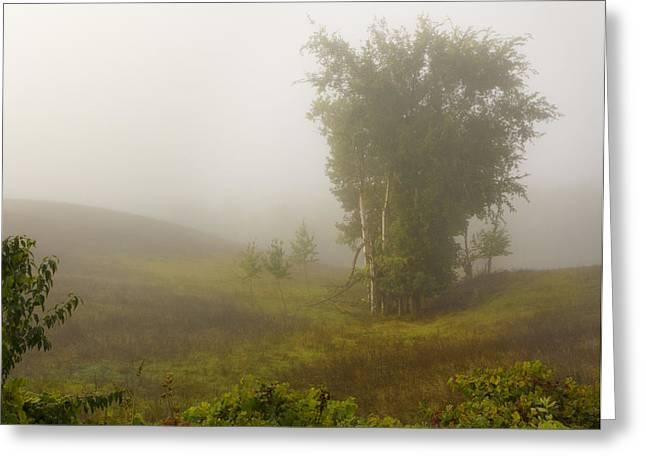 Barbara Smith Greeting Cards - Lowland Fog Greeting Card by Barbara Smith