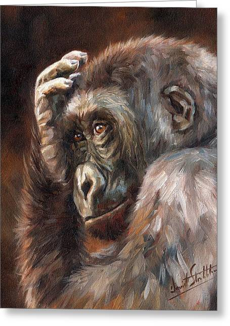 Primates Greeting Cards - Lowland Gorilla Greeting Card by David Stribbling