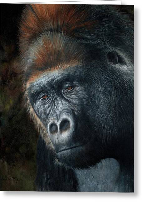 Primates Greeting Cards - Lowland Gorilla Painting Greeting Card by David Stribbling