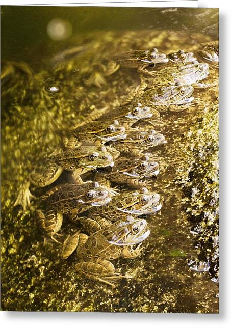 Aquatic Animal Greeting Cards - Lowland leopard frogs hunting Greeting Card by Science Photo Library