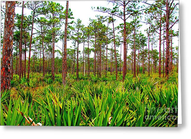 Florida Wild Turkey Greeting Cards - Loxahatchee Greeting Card by Carey Chen