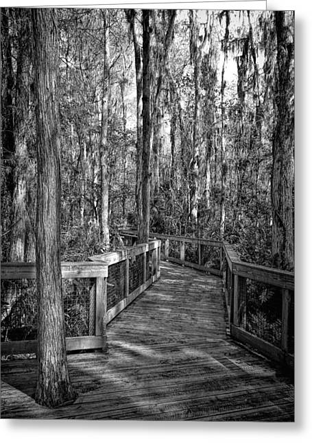 Wildlife Refuge. Greeting Cards - Loxahatchee Refuge-2 Greeting Card by Rudy Umans