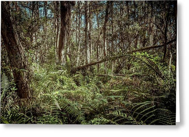 Eco System Greeting Cards - Loxahatchee Refuge-1 Greeting Card by Rudy Umans