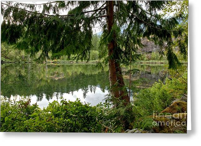 Canadian Wilderness Greeting Cards - Lush Green At Starvation Lake Greeting Card by Adam Jewell