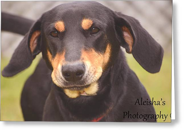 Lucky Dogs Greeting Cards - Lucky Greeting Card by Aleisha Gates