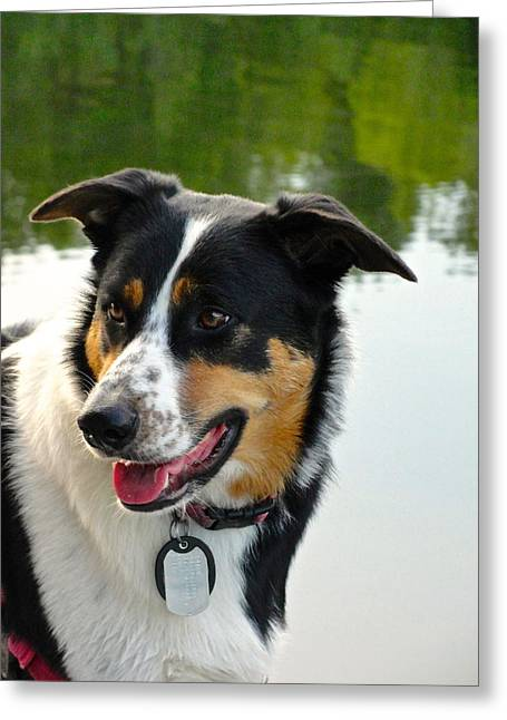 Lucky Dogs Greeting Cards - Lucky Dog Greeting Card by Norma Brock
