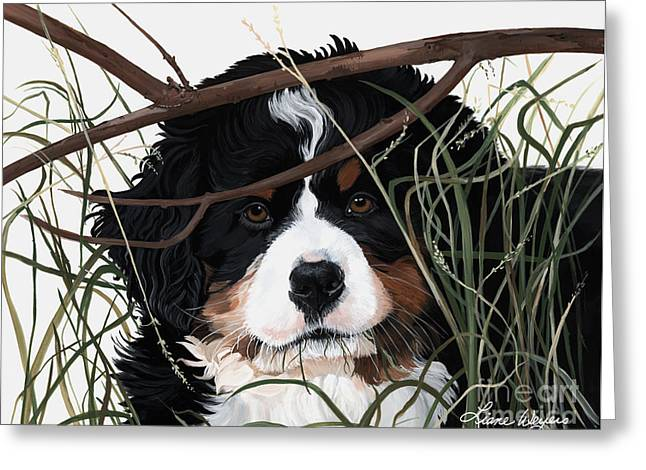 Berner Greeting Cards - Lucy youve got somesplainin to do Greeting Card by Liane Weyers