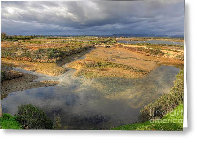 Praia De Faro Greeting Cards - Ludo Nature Reserve Greeting Card by English Landscapes