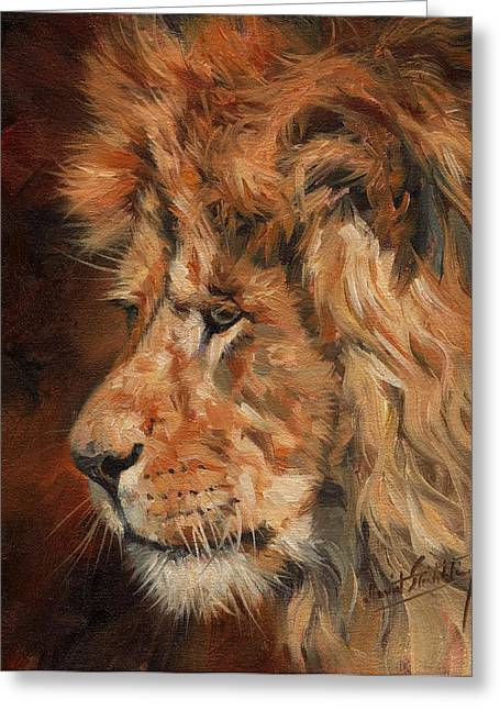 Lions Greeting Cards - Luion Greeting Card by David Stribbling
