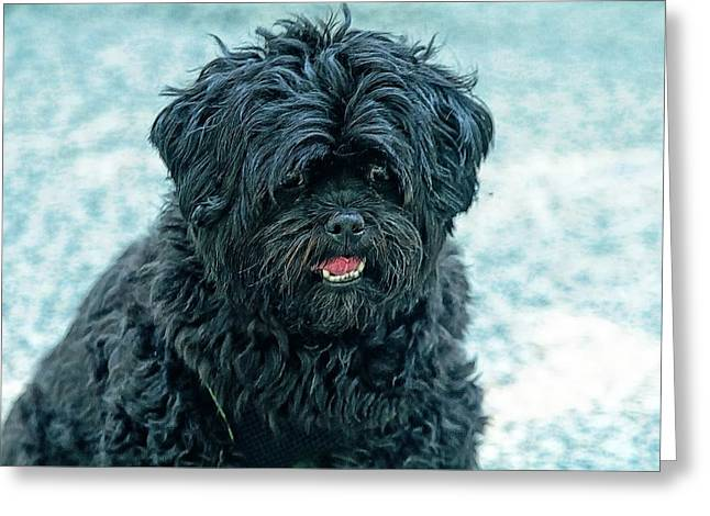 Pet Therapy Greeting Cards - Luke Is A Therapy Dog Greeting Card by Constantine Gregory
