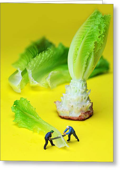 Lettuce Green Greeting Cards - lumber workers cutting Lettuce little people on food Greeting Card by Paul Ge