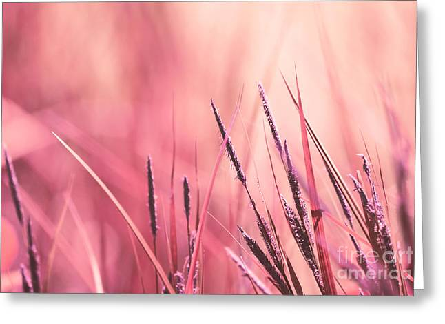 Pastel Pink Greeting Cards - Luminis - s09c - Pink Greeting Card by Variance Collections