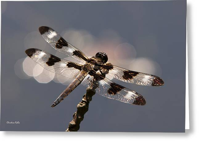 Luminous Dragonfly Greeting Card by Christina Rollo