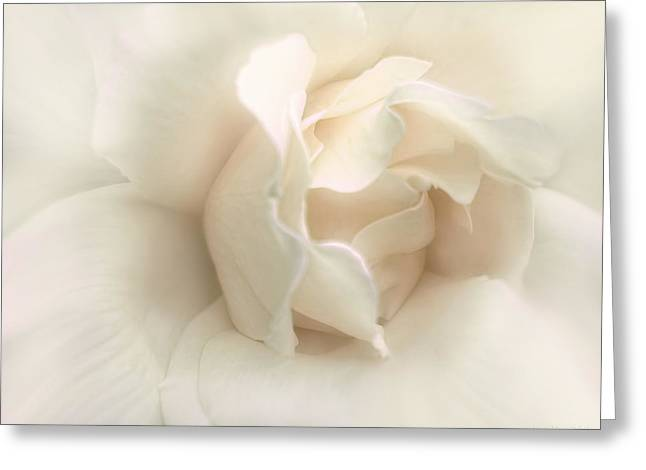 Ivory Roses Greeting Cards - Luminous Ivory Rose Flower Greeting Card by Jennie Marie Schell