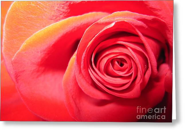 Texture Floral Drawings Greeting Cards - Luminous Red Rose 1 Greeting Card by Tara  Shalton