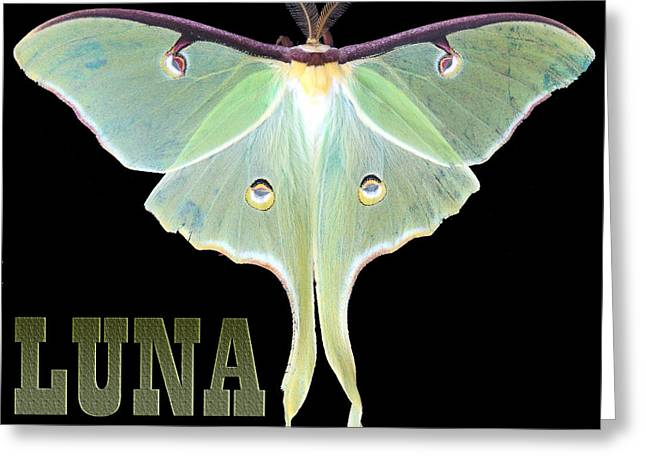 LUNA 1 Greeting Card by Mim White