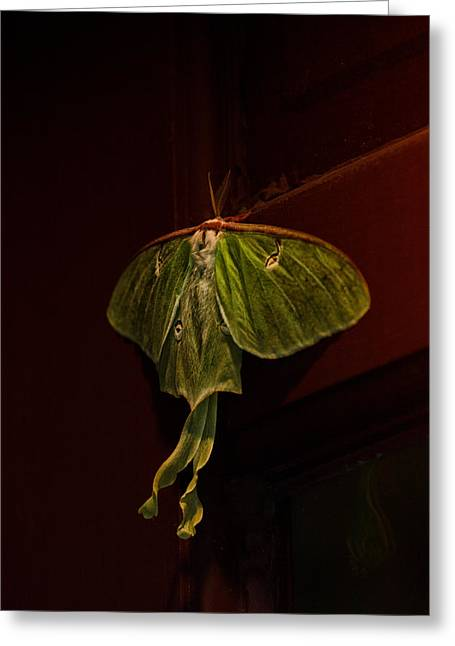 Luna At My Door Greeting Card by Susan Capuano