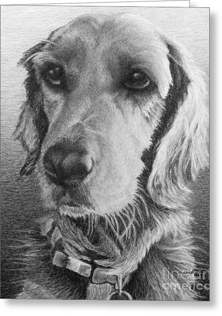 Collar Drawings Greeting Cards - Luna Greeting Card by Chad Keith
