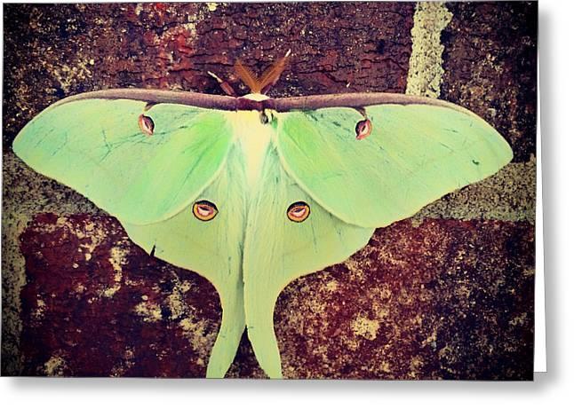 Luna Greeting Cards - Luna Moth Greeting Card by Mountain Dreams