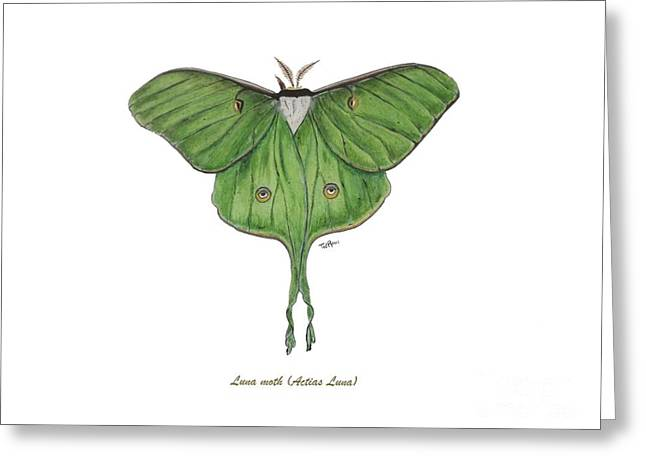 Luna Moth Greeting Cards - Luna Silk Moth Greeting Card by Ted Reeves