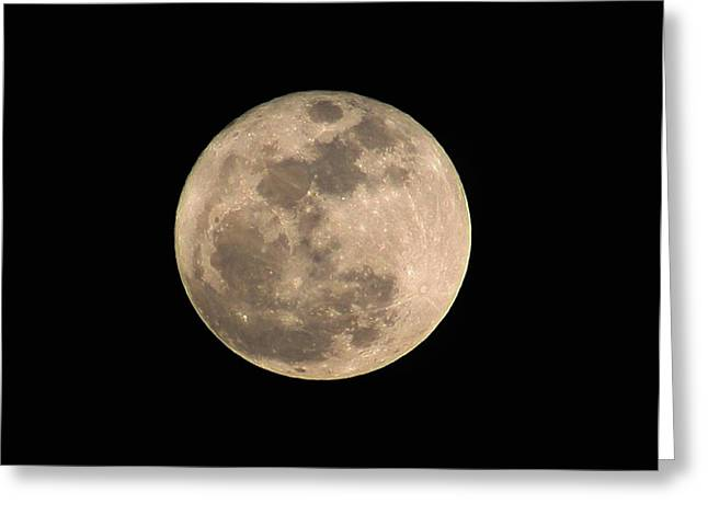 Photogrpah Greeting Cards - Luna Greeting Card by William Gambill