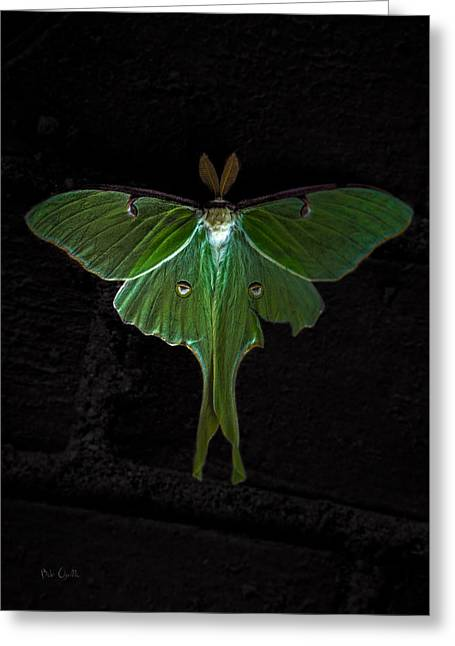 Lunar Moth Greeting Card by Bob Orsillo